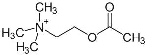 acetylcholin