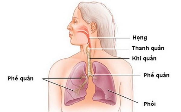 bệnh học phổi