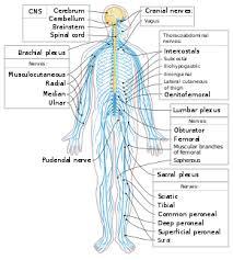 hệ thần kinh